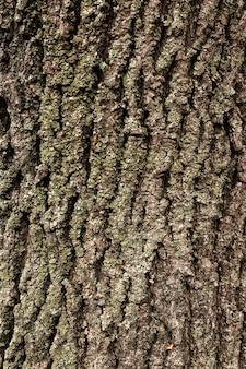 Płaskie ułożenie kory drzew