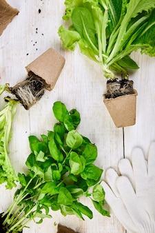 Płaskie ułożenie narzędzi ogrodniczych, bazylia, doniczka eco, ziemia
