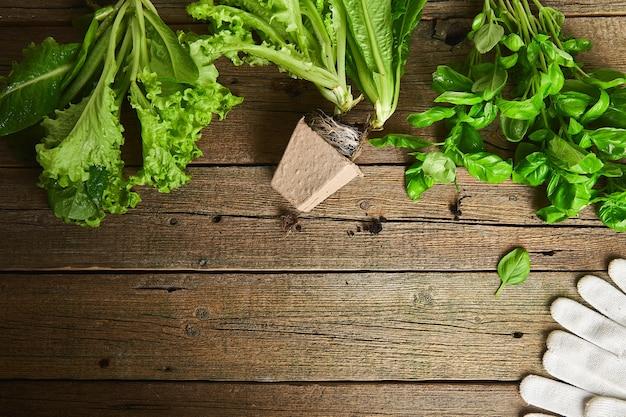 Płaskie ułożenie narzędzi ogrodniczych, bazylia, doniczka ekologiczna zieleni, ziemia