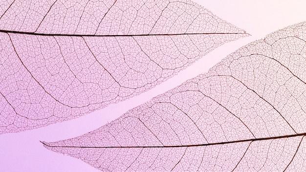Płaskie ułożenie przezroczystej tekstury liści z kolorowym odcieniem