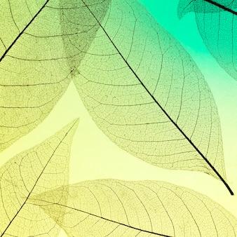 Płaskie ułożenie przezroczystych liści z kolorowym odcieniem
