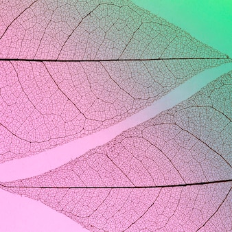 Płaskie ułożenie przezroczystych liści
