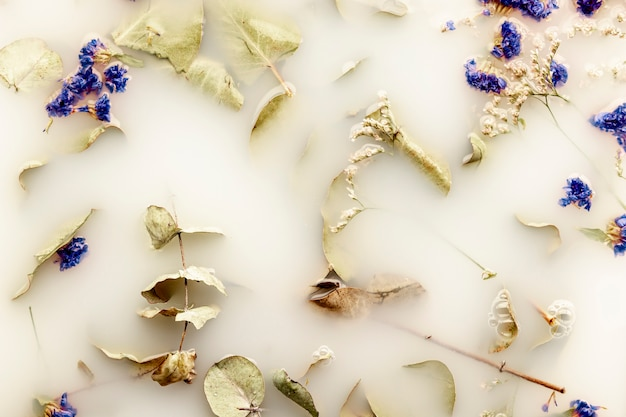 Płasko leżały blade liście i ciemnoniebieskie kwiaty w białej wodzie