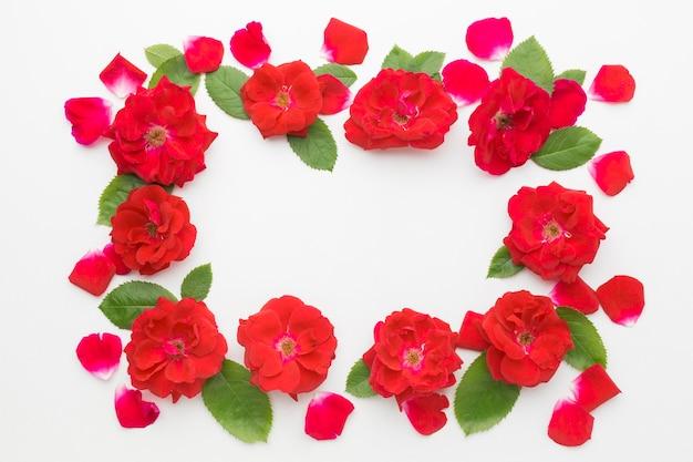 Płasko leżały róże lodowe i ramka liści