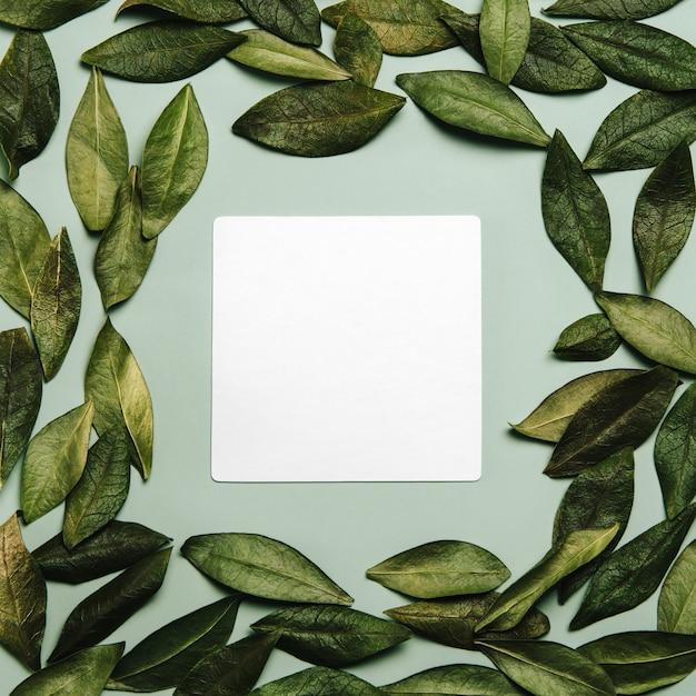 Płasko ułożona rama wykonana z naturalnych liści i pustego arkusza