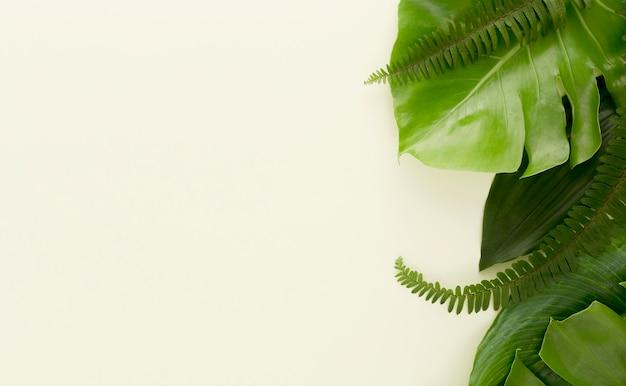 Płasko ułożone dużo liści i paproci