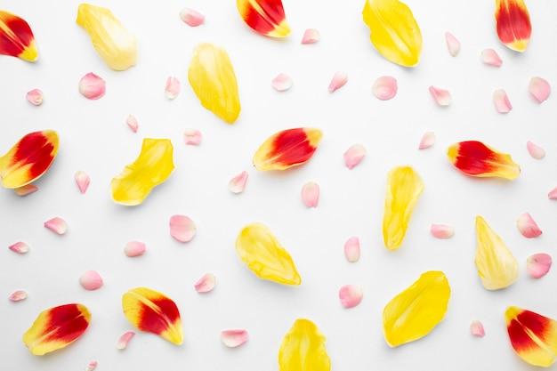 Płasko ułożone płatki tulipanów