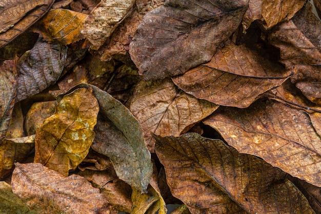 Płasko ułożone suche liście