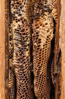 Plaster miodu dzikich pszczół, mający naturalny kształt, zbliżenie