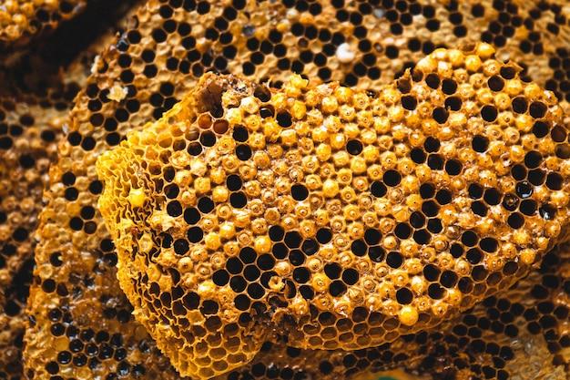 Plaster miodu gniazdo larw pszczół i nektar o strukturze plastra miodu
