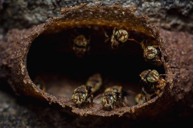 Plaster miodu małych anielskich pszczół na betonowej ścianie s