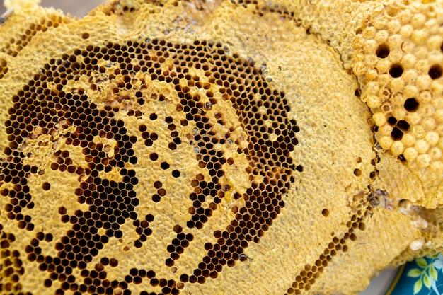 Plaster miodu wieśniaka naturalne słodkie jedzenie.