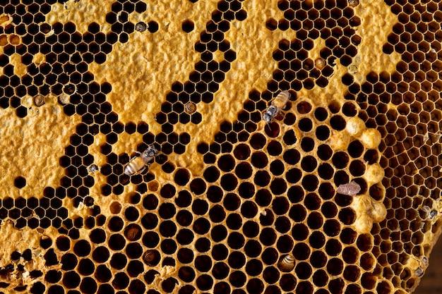 Plaster miodu z pszczoła tekstura tło