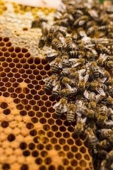 Plaster miodu z pszczołami