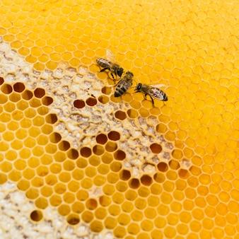 Plaster miodu z widokiem z góry na pszczoły