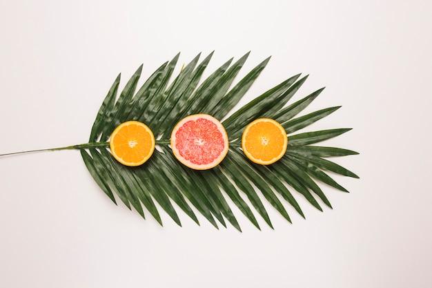 Plasterki soczysty grapefruitowy i pomarańczowy przy palmowym liściem