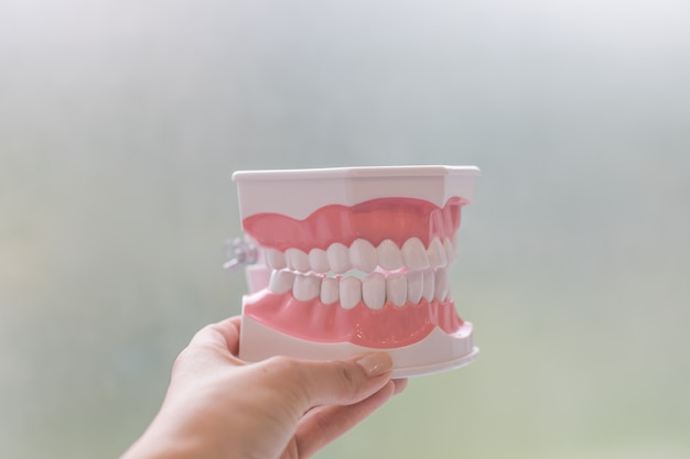 Plastikowe modele ludzkich zębów na białym tle. plastikowy model medyczny zębów. pojęcie zdrowia jamy ustnej, próchnicy zębów; stomatologia zębów student uczący się modelu nauczania przedstawiającego zęby, korzenie, dziąsła, gumę
