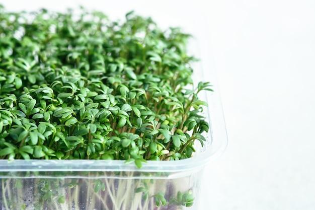 Plastikowe pudełka z rosnącymi mikrozielonymi rzeżuchą i brokułami