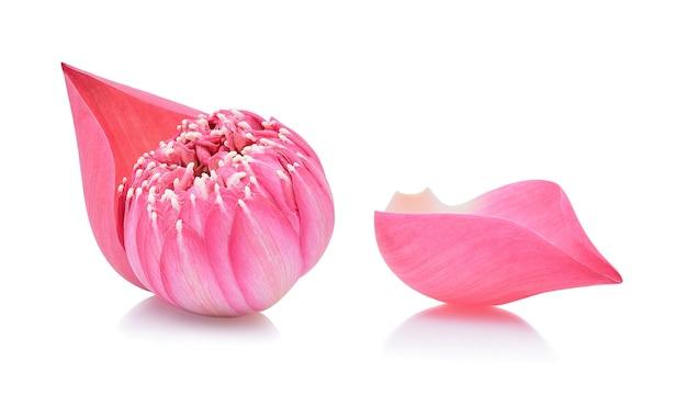 Płatek lotosu