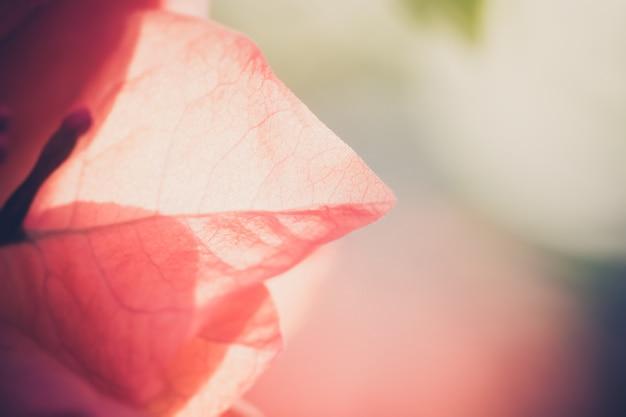 Płatka kwiat na zamazanym tle i lekki ranek myśleć piękna natura.