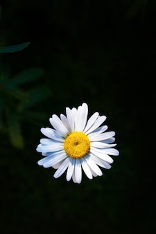 Płatki kwiatów w kroplach wody po deszczu
