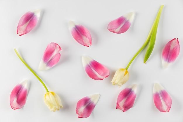 Płatki kwiatów widok z góry