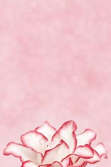 Płatki lilii piwonii z bliska. naturalne tło kwiatowe.