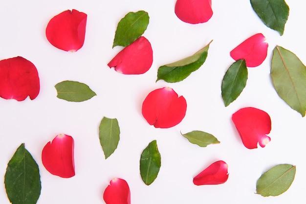 Płatki róż leżące na niebieskim tle