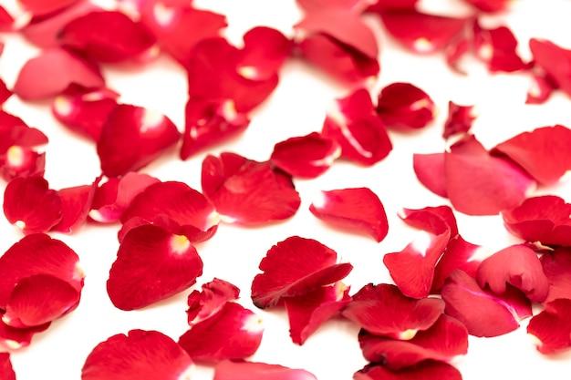 Płatki róż ułożone we wzór na białym tle.