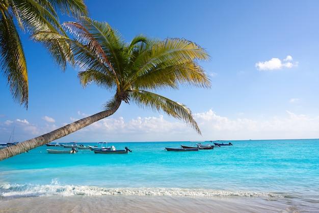 Playa del carmen plażowi drzewka palmowe meksyk