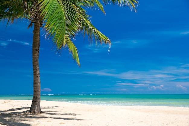 Plaża i tropikalny krajobraz morski