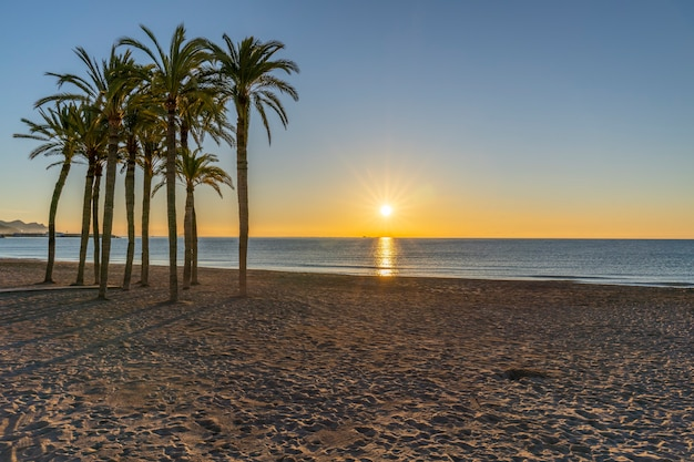Plaża miasta villajoyosa z palmami o wschodzie słońca