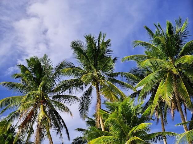 Plaża na wyspie boracay, filipiny