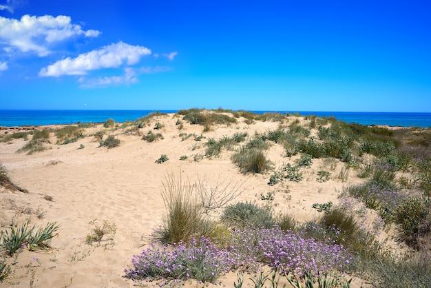 Plaża playa w alcossebre również alcoceber
