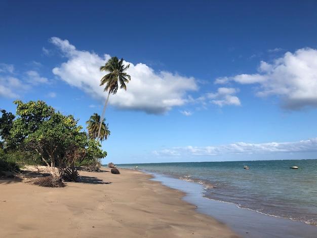 Plaża przezroczyste morze i drzewa z boku