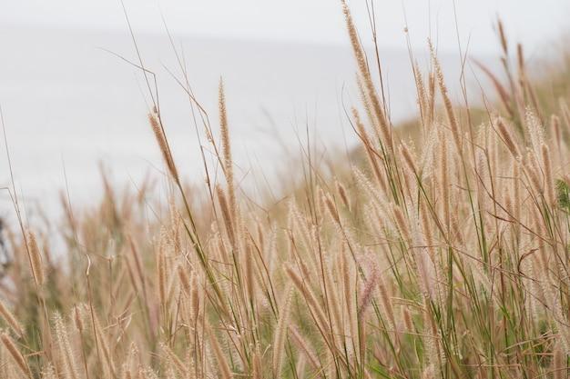 Plaża sucha trawa z morzem