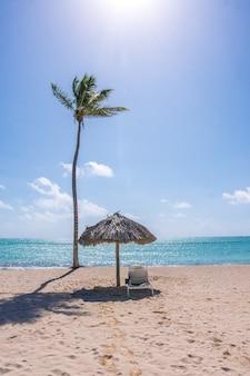 Plaża w słoneczny dzień na karaibach z palmami