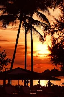 Plażowy zmierzch przy wybrzeże linią, drzewko palmowe
