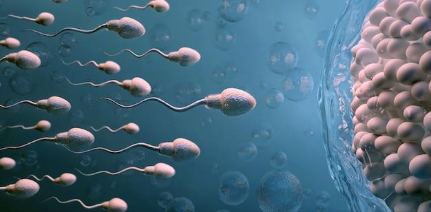 Plemnik i komórka jajowa