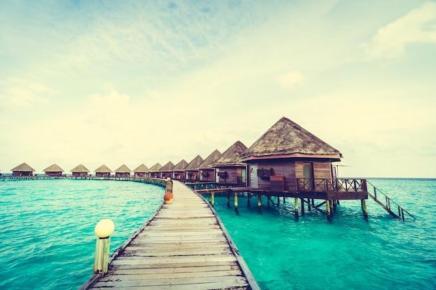 Plenerze palmy wody plaży