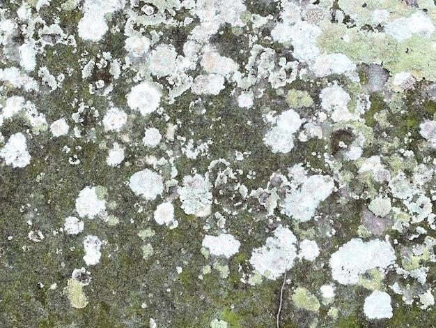 Pleśń i mech na kamiennej ścianie