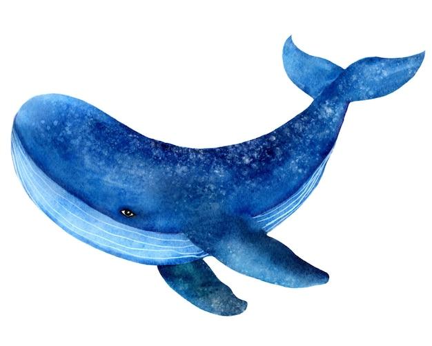 Płetwal błękitny, zwierzę oceaniczne, ssak, akwarela ilustracja