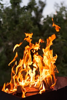 Płomienie ognia. pionowy