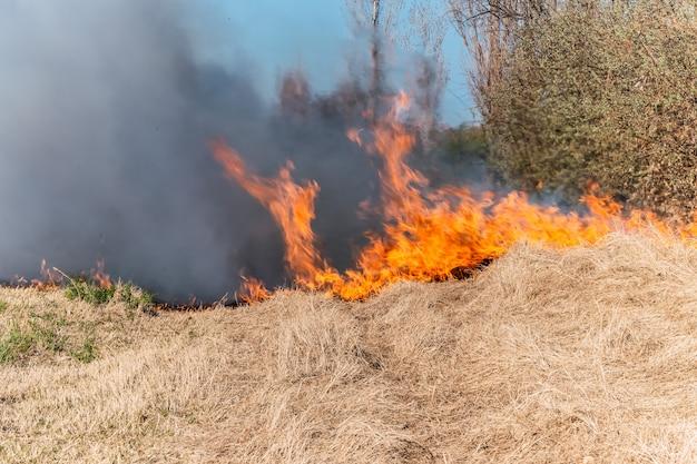 Płonąca trawa w polu, z bliska. natura w ogniu. tematy pożaru, katastrofy i wydarzeń ekstremalnych.