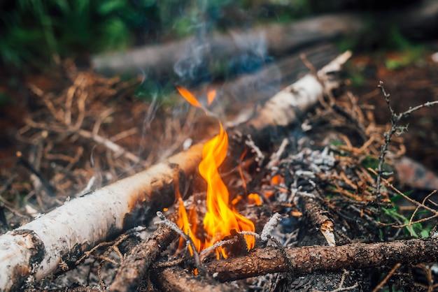 Płonące gałęzie i chrust w ogniu zbliżenie.