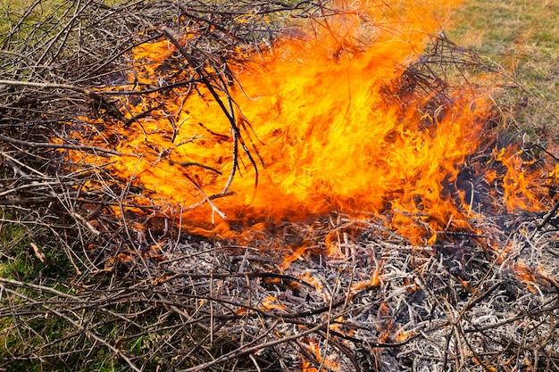 Płonące suche gałęzie w ich letnim domku duże ognisko z jasnymi płomieniami w jesienny dzień