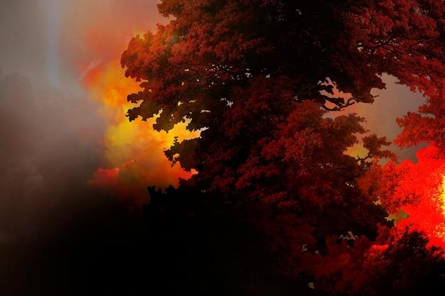 Płonący las, globalne ocieplenie, fotografia pożaru