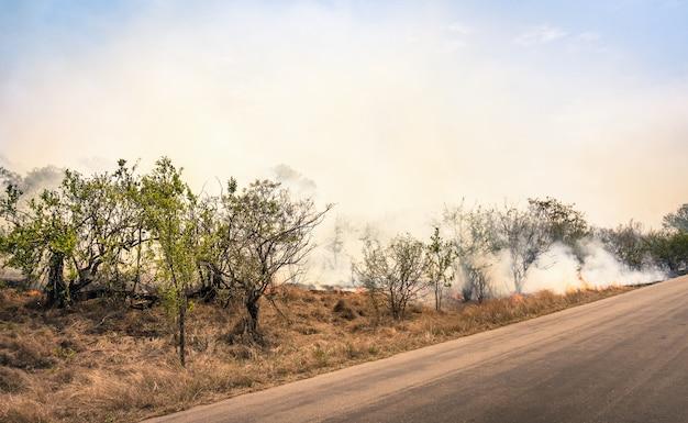 Płonący pożar buszu w parku przyrody w rpa
