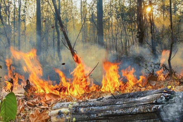 Płonący pożar lasów deszczowych jest spowodowany przez ludzi