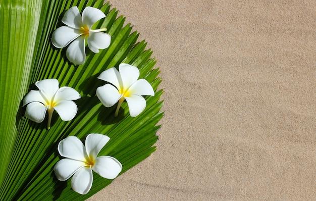 Plumeria białe kwiaty na liściu palmowym wentylatora fidżi na piasku.